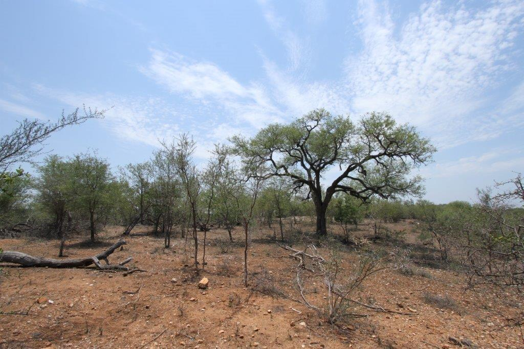 Vacant Land / Plot in Grietjie Private Nature Reserve For Sale