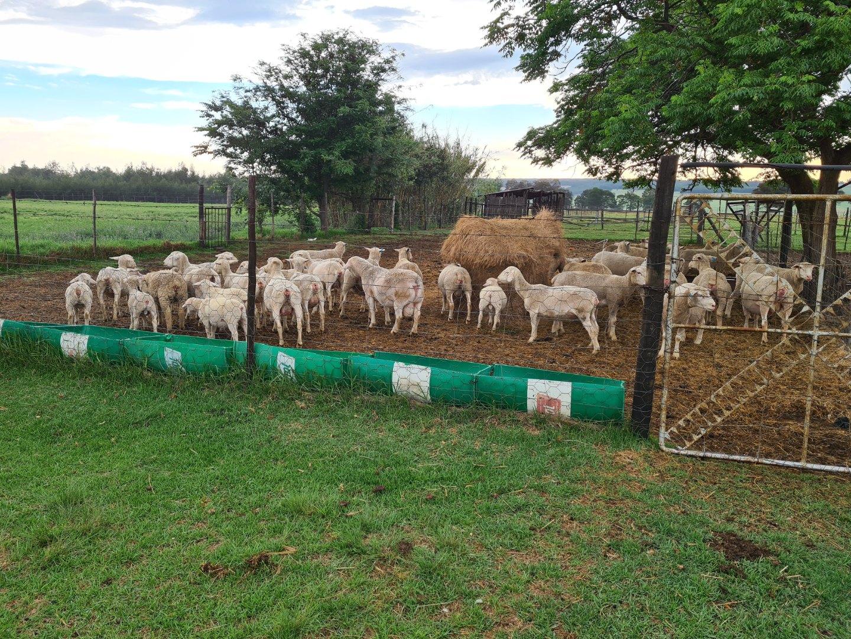 Farm in Bashewa AH For Sale