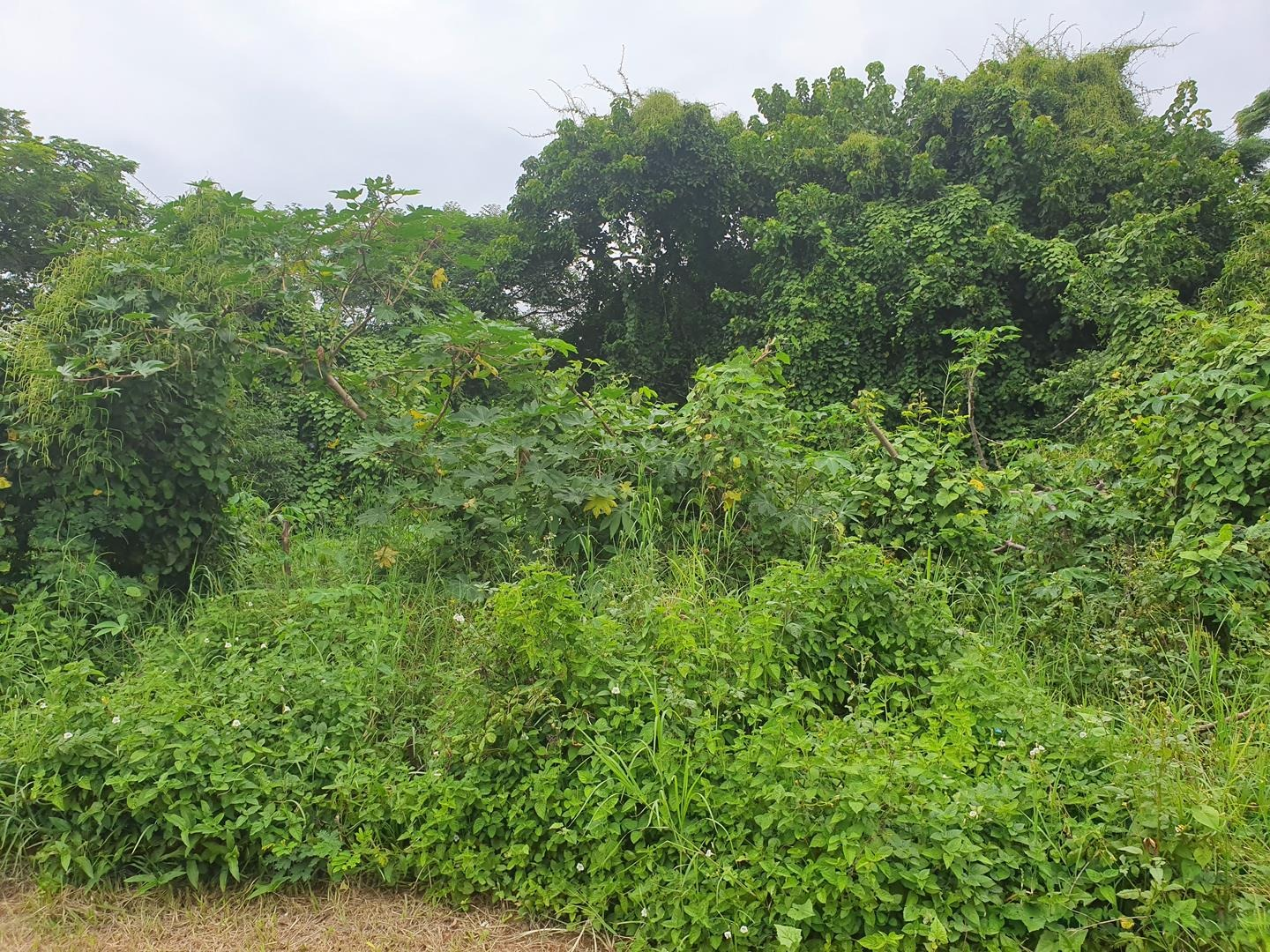 Vacant Land / Plot in Ballito Central For Sale