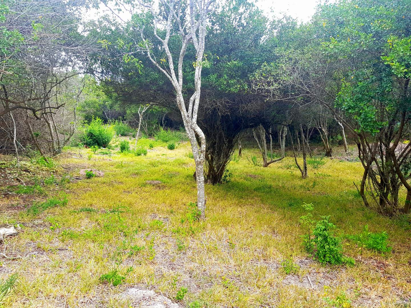 Vacant Land / Plot in Kingfisher Creek For Sale