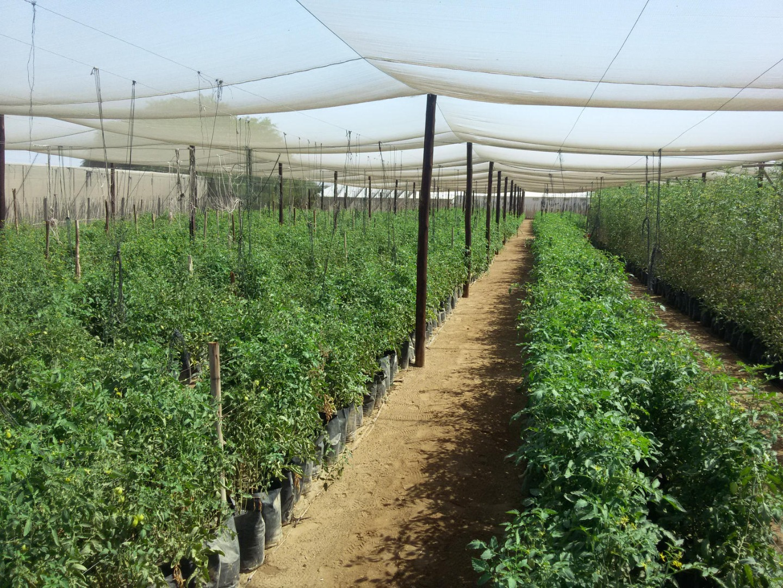 Farm in River Plots For Sale
