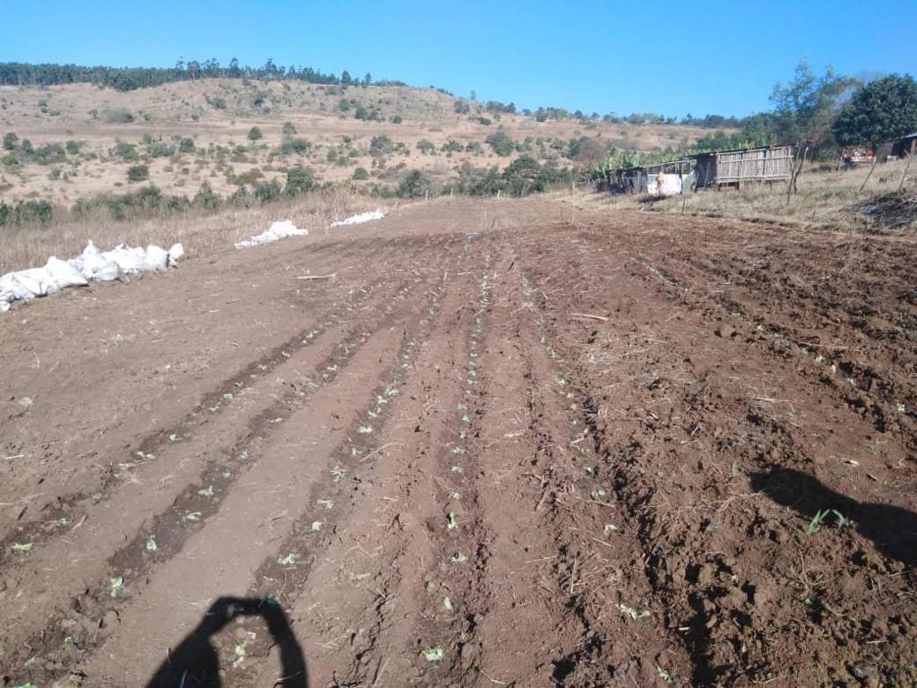 Farm in Nhlangano For Sale