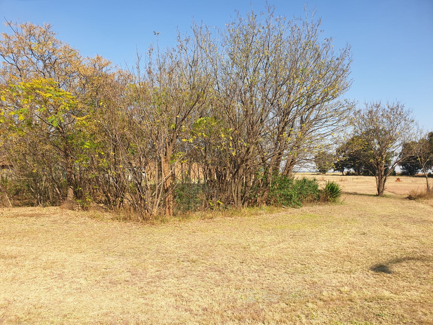 Vacant Land / Plot in Blanwick Park For Sale